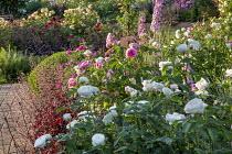 Rose garden, Rosa 'Gertrude Jekyll', Rosa 'Tranquility', delphiniums, heuchera, Rosa 'Rose de Recht', Rosa 'Charles Austin', Rosa 'Munstead Wood'