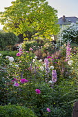Rose garden, Rosa 'Rose de Recht', Rosa 'Tranquility', Rosa 'Charles Austin', Rosa 'Munstead Wood', Rosa 'White Flight' on arbour, veronicastrum, catalpa