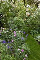 Grass path, Rosa 'Ghislaine de Feligonde', Rosa x centifolia 'Muscosa', Philadelphus 'Belle Etoile', geranium
