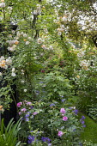 Grass path, Rosa 'Ghislaine de Feligonde', Rosa x centifolia 'Muscosa', geranium, Philadelphus 'Belle Etoile'