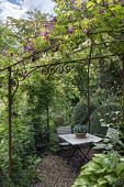 Table and chairs under rose arbour, hosta in container, Rosa 'Perennial Blue'