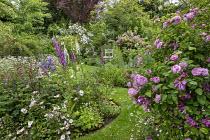 Rosa 'Ispahan', Rosa x richardii, Rosa 'Rambling Rector', Digitalis purpurea, peonies, geraniums, leucanthemum