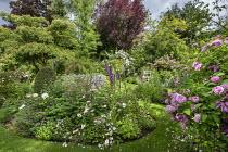 Circular border, grass path, Rosa 'Ispahan', Rosa x richardii, Rosa x centifolia 'Muscosa', Digitalis purpurea, geranium, campanula, peony