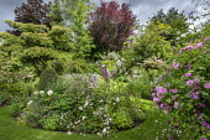 Circular border, grass path, Rosa 'Ispahan', Rosa x richardii, Rosa x centifolia 'Muscosa', Digitalis purpurea