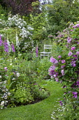 Cottage garden, Rosa 'Ispahan', Rosa x richardii, Digitalis purpurea, geraniums, wooden chair, arch with Rosa 'Rambling Rector'