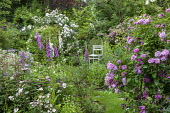 Cottage garden, Rosa 'Ispahan', Rosa x richardii, Digitalis purpurea, geraniums, arch with Rosa 'Rambling Rector'