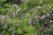 Cottage garden, foxgloves, geraniums, Rosa 'Ispahan', Rosa x richardii, Rosa x centifolia 'Muscosa', wooden chair, arch with Rosa 'Rambling Rector'