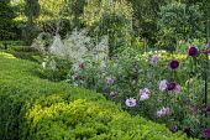 Roses and Aruncus dioicus in box-edged border