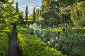 Gravel path through clipped box hedges, roses, Aruncus dioicus, rose arch