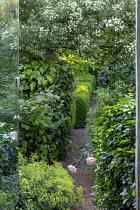 Gravel path, ramblling Rosa filipes 'Kiftsgate' climbing over arch, Alchemilla mollis