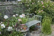 Metal bench, rose, peony
