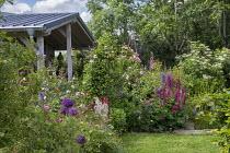 Cottage garden, roses, alliums, lupins