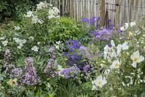 Roses, thalictrum, geranium