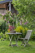 Wooden chair and table on lawn, Lysimachia punctata, Digitalis purpurea, roses