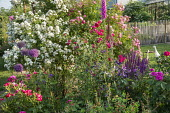 Roses, metal plant support, foxglove, alliums, ducks on lawn, salvia