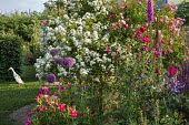 Roses, metal plant support, foxglove, alliums, duck on lawn