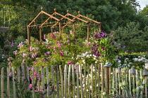 Rustic wooden stake fence, roses, metal pergola