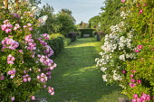 View along grass path to bench, roses