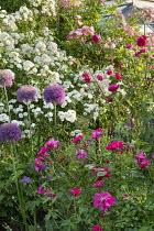 Roses, alliums