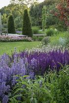 Salvia, nepeta, penstemon, geranium yew topiary