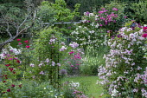Rose garden, Rosa 'Guirlande Rose' (Lens 2008), Rosa 'Ghislaine de Féligonde' (Turbat 1916), Rosa 'Roville' (André Eve 2002), Rosa 'Eugen Fürst' (Soupert/Notting 1875), Rosa 'Alsace', Rosa moschata...