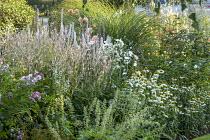 White border, Persicaria amplexicaulis 'Alba', Echinacea purpurea 'White Swan', Heuchera villosa 'Autumn Bride', roses, Anemone x hybrida 'Whirlwind', miscanthus