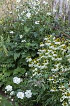 White border, Persicaria amplexicaulis 'Alba', Echinacea purpurea 'White Swan', Heuchera villosa 'Autumn Bride', roses, Anemone x hybrida 'Whirlwind', actaea