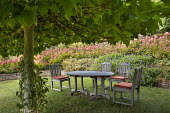 Wooden table and chairs with cushions on lawn under tree, hydrangeas and geraniums in raised bed
