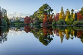 View across lake to Sheffield Park House, reflections, Nyssa sylvatica, Taxodium distichum