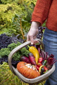 Woman holding trug with harvested Winter squash 'Turk's Turban', kale, peppers, beetroot and Swiss chard