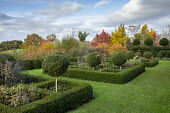 Clipped standard box lollipops in clipped box hedge parterre