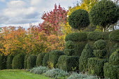 Clipped box hedge and yew topiary, amelanchier, prunus, liquidambar, acer
