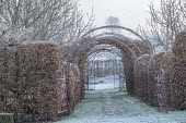 Beech hedge trained around metal archway, stepping stone path across lawn