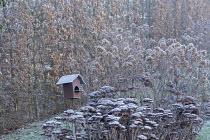Metal bird feeder in border, frost on sedum and hydrangea seedheads