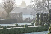 View across clipped box hedges and yew topiary in frost, Robinia pseudoacacia 'Umbraculifera', skittle alley in frost