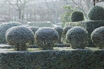 Topiarised yew hedge