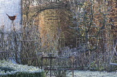 Metal plant supports and bird stakes in winter garden