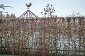 Metal pergola by hornbeam hedge, metal bird ornament