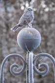 Metal bird ornament on plant support