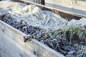 Horticultural fleece covering crops on raised bed, plant protection