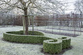 Sinuous low clipped box hedge around base of tree, metal pergola