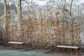 Benches by beech hedge screen