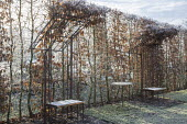 Metal arbour seats, hornbeam hedge