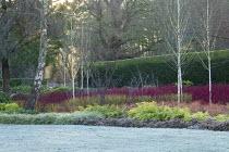 Betula utilis var. jacquemontii, Cornus alba 'Sibirica', Cornus sanguinea 'Midwinter Fire', Cornus sericea 'Flaviramea', Rubus thibetanus 'Silver Fern', Carex 'Ice Dance', Epimedium × versicolor 'Sul...