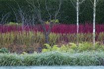 Betula utilis var. jacquemontii, Cornus alba 'Sibirica', Cornus sanguinea 'Midwinter Fire', Cornus sericea 'Flaviramea', Rubus thibetanus 'Silver Fern', Carex 'Ice Dance', Dryopteris erythrosora