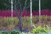 Betula utilis var. jacquemontii, Cornus alba 'Sibirica', Cornus sanguinea 'Midwinter Fire', Cornus sericea 'Flaviramea', Rubus cockburnianus
