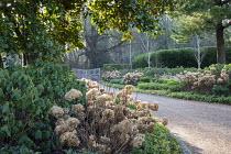 Gravel driveway edged with pachysandra, hydrangea seedheads, Betula utilis var. jacquemontii