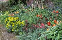Euphorbia polychroma, Euphorbia griffithii 'Fireglow', Tulipa 'Jimmy', 'Ballerina', Tulipa 'Flaming Parrot', Polygonatum × hybridum
