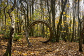 Wooden sculpture archway in coppiced woodland