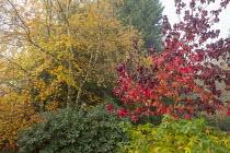 Birch and Liquidambar styraciflua